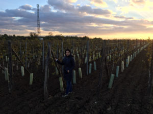 vinohrad Komjatice, Komjathi, víno Komjatice