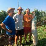 vinohrad - inštalácia sietí proti škorcom