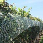 vinohrad - siete proti škorcom
